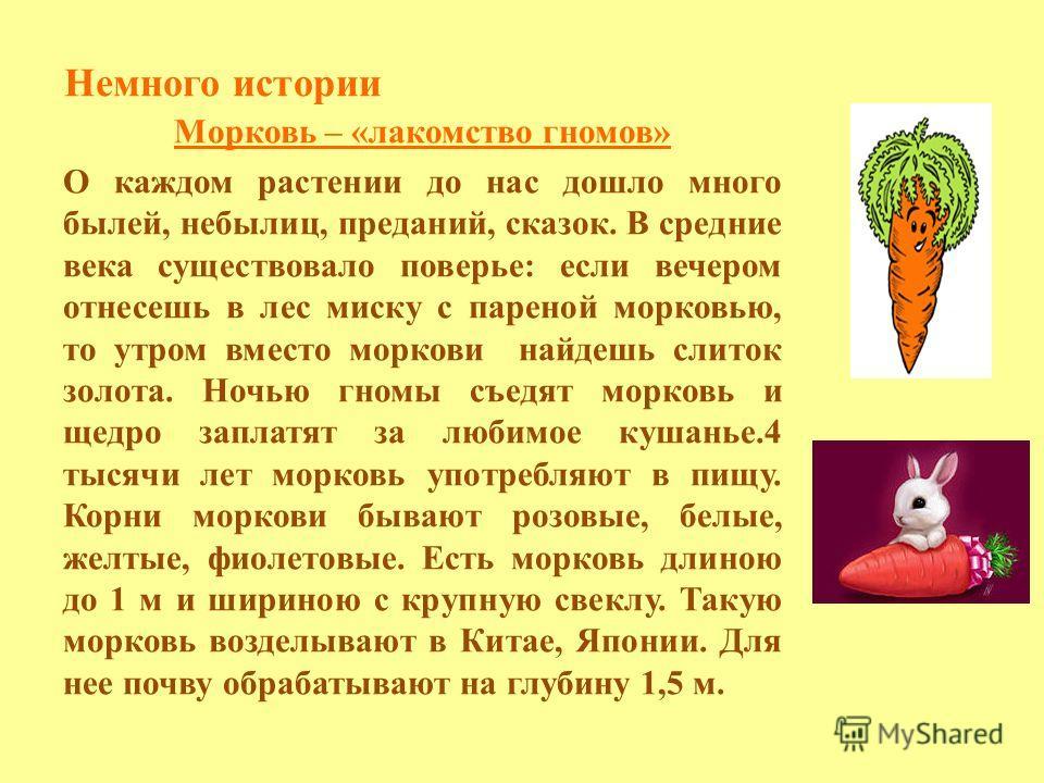Немного истории Морковь – «лакомство гномов» О каждом растении до нас дошло много былей, небылиц, преданий, сказок. В средние века существовало поверье: если вечером отнесешь в лес миску с пареной морковью, то утром вместо моркови найдешь слиток золо