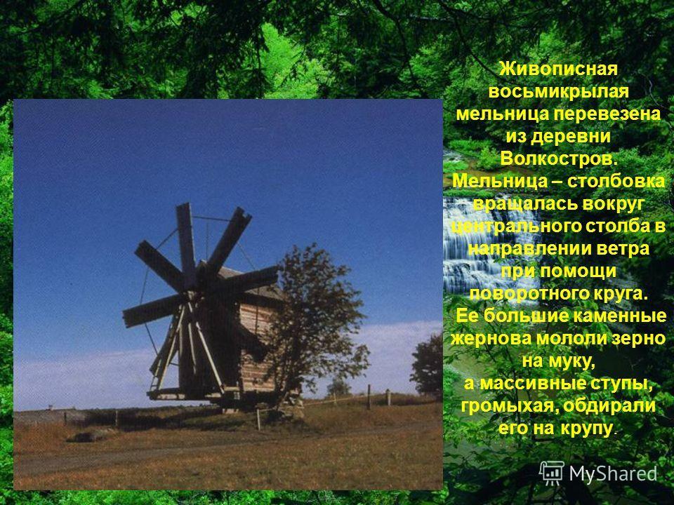 Живописная восьмикрылая мельница перевезена из деревни Волкостров. Мельница – столбовка вращалась вокруг центрального столба в направлении ветра при помощи поворотного круга. Ее большие каменные жернова мололи зерно на муку, а массивные ступы, громых