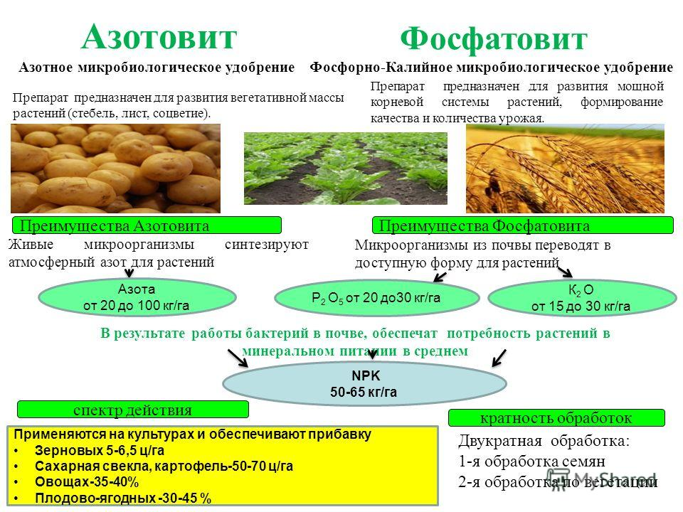 Азотовит Азотное микробиологическое удобрение спектр действия Преимущества Азотовита Препарат предназначен для развития вегетативной массы растений (стебель, лист, соцветие). кратность обработок Двукратная обработка: 1-я обработка семян 2-я обработка
