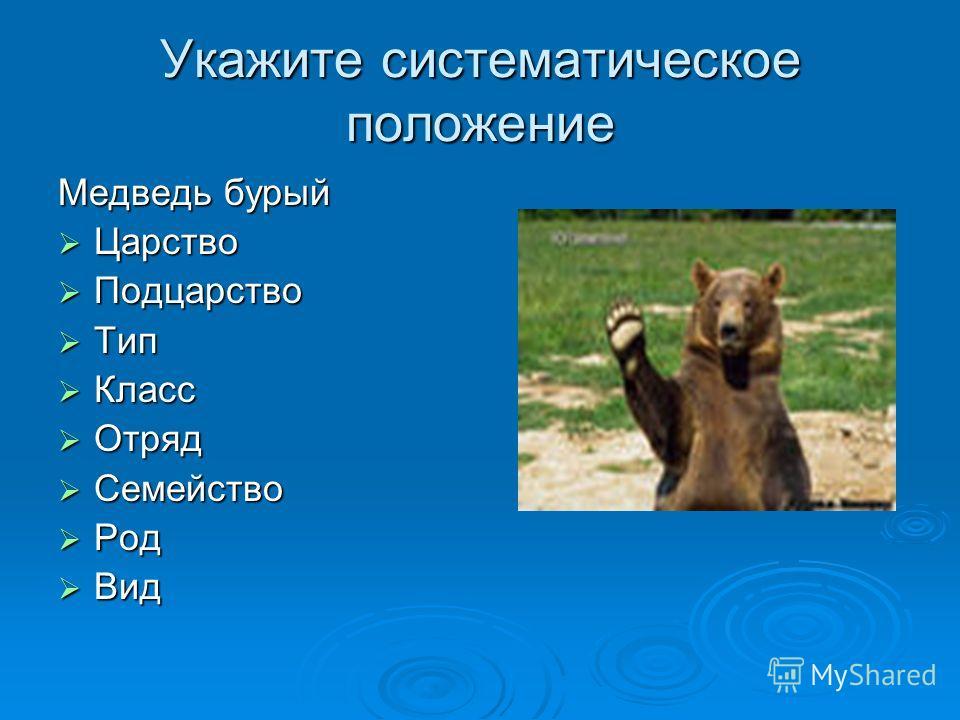Укажите систематическое положение Медведь бурый Царство Царство Подцарство Подцарство Тип Тип Класс Класс Отряд Отряд Семейство Семейство Род Род Вид Вид