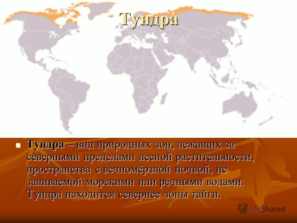 Тундра Тундра – вид природных зон, лежащих за северными пределами лесной растительности, пространства с вечномёрзлой почвой, не заливаемой морскими или речными водами. Тундра находится севернее зоны тайги. Тундра – вид природных зон, лежащих за север