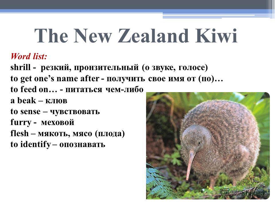 The New Zealand Kiwi Word list: shrill - резкий, пронзительный (о звуке, голосе) to get ones name after - получить свое имя от (по)… to feed on… - питаться чем-либо a beak – клюв to sense – чувствовать furry - меховой flesh – мякоть, мясо (плода) to