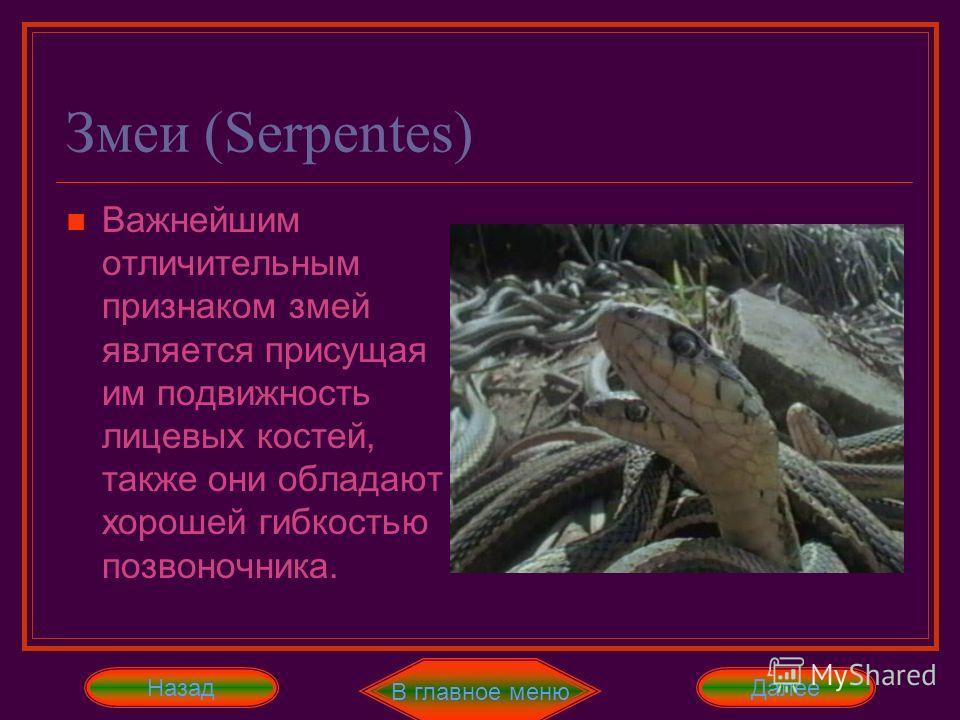 Хамелеоны (Chamaeleontidae) По новой классификации чешуйчатых, хамелеонов выделяют в подотряд, хотя раньше они относились к подотряду ящерицы. Далее Отличительной чертой хамелеонов является длинный язык, закрученный в спираль хвост, глаза, способные