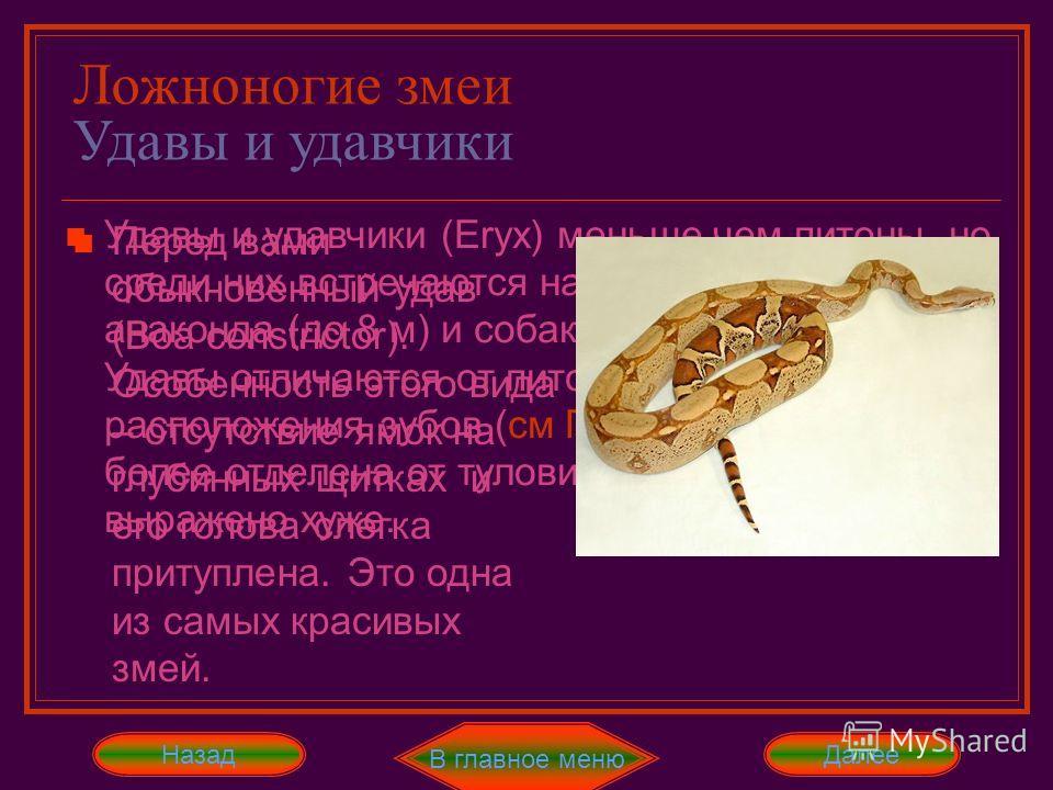 Ложноногие змеи Питоны Название питонов даётся по окрасу их чешуи. Перед нами сетчатый питон, но есть и ромбические, иероглифовые и тигровые. Также есть и небольшой пёстрый южноафриканский питон Удавы и удавчики (Eryx) меньше чем питоны, но среди них