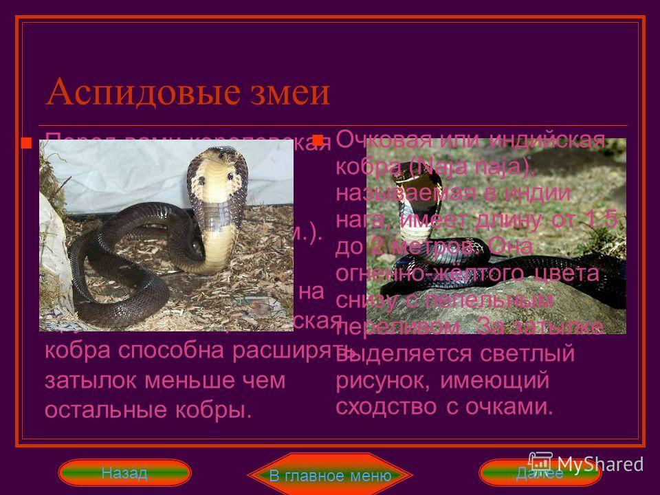 Аспидовые змеи В это семейство мы выносим тех ядовитых змей, тело которых имеет вытянутую форму, а голова маленький размер. Чешуя аспидных змей представляет собой 15 рядов гладких чешуек. Эта чешуя придаёт им королевский, аристократический вид. Ещё о