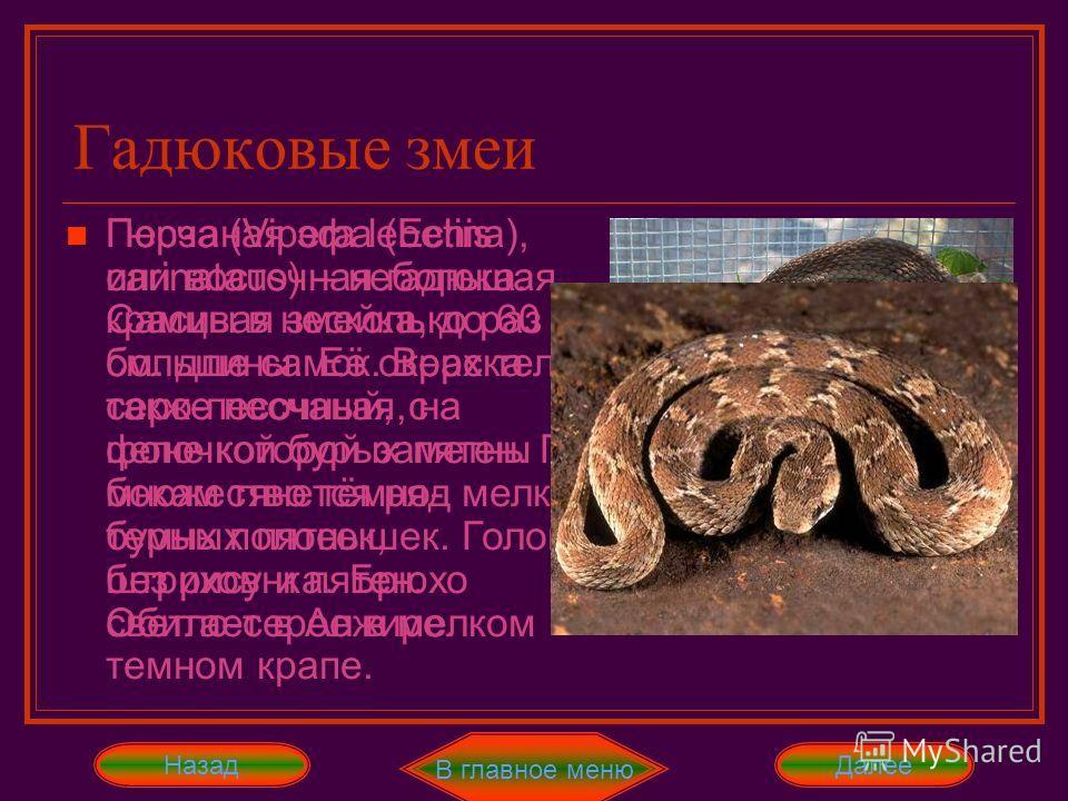 Гадюковые змеи НазадДалее Отличительный признак обыкновенной гадюки (Vipera berus) – это тёмная зигзагообразная полоса и крепкие видоизменённые щитки на темени. Контраст цветов очень велик, но чаще всего у самцов - это пепельно-серый, а у самок – бур
