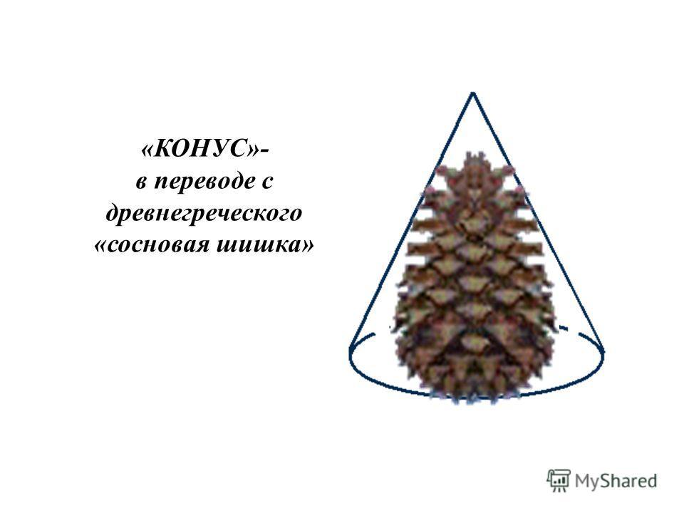 «КОНУС»- в переводе с древнегреческого «сосновая шишка»
