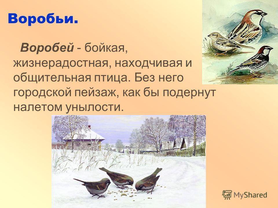 Воробьи. Воробей - бойкая, жизнерадостная, находчивая и общительная птица. Без него городской пейзаж, как бы подернут налетом унылости.