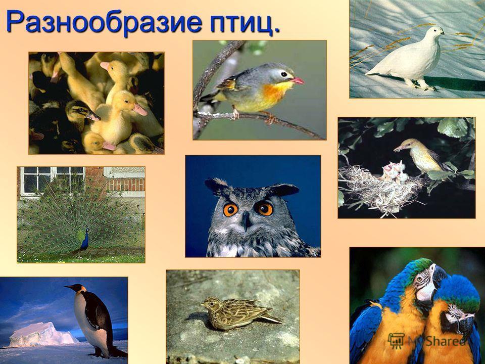 Разнообразие птиц.