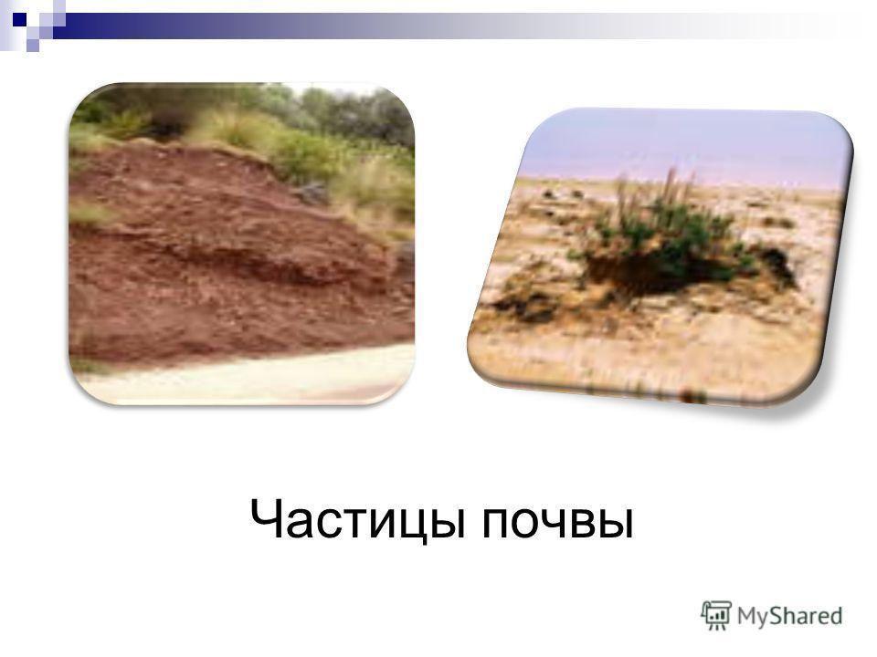 Частицы почвы