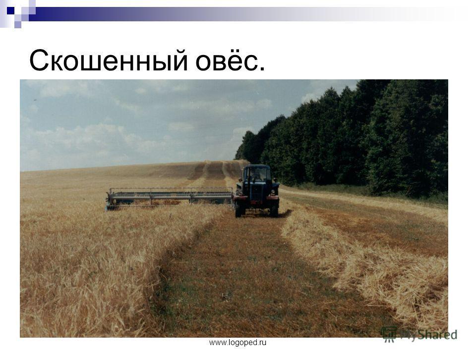 www.logoped.ru Скошенный овёс.