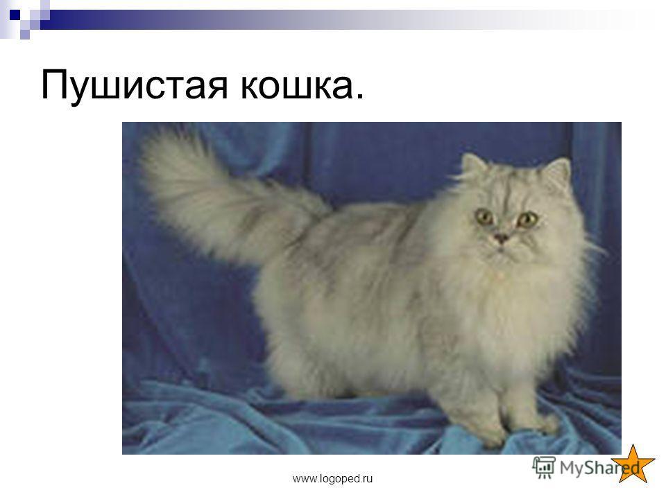 www.logoped.ru Пушистая кошка.