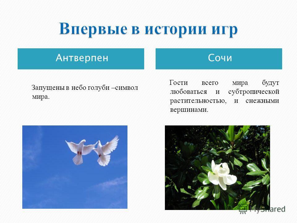АнтверпенСочи Запущены в небо голуби –символ мира. Гости всего мира будут любоваться и субтропической растительностью, и снежными вершинами.