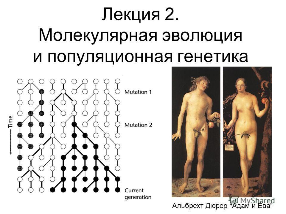 Лекция 2. Молекулярная эволюция и популяционная генетика Альбрехт Дюрер Адам и Ева