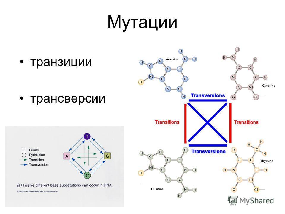 Мутации транзиции трансверсии