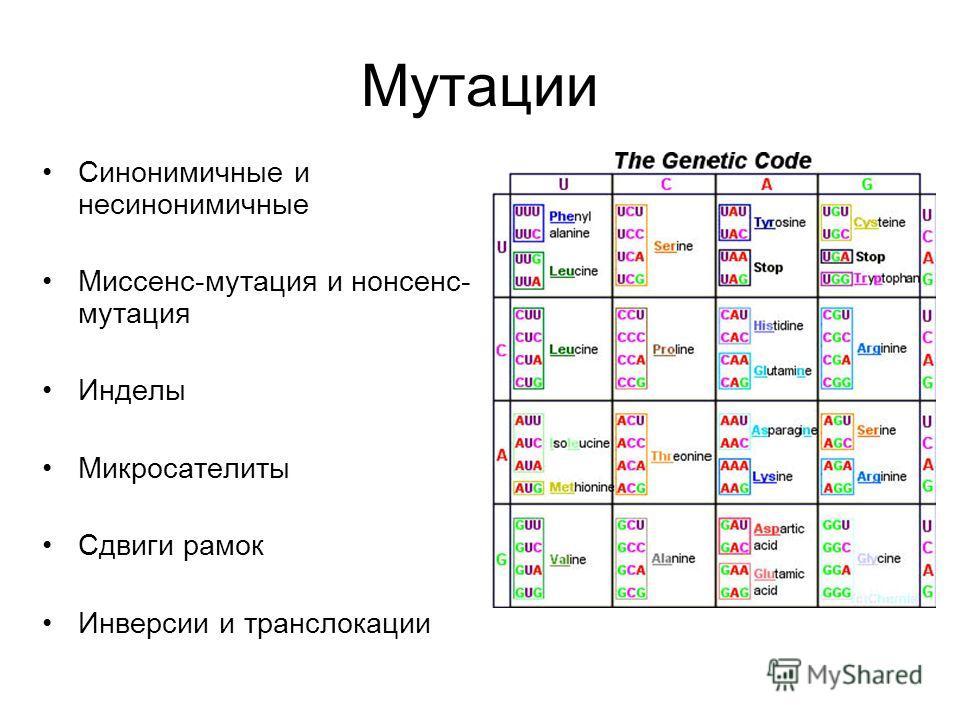 Мутации Синонимичные и несинонимичные Миссенс-мутация и нонсенс- мутация Инделы Микросателиты Сдвиги рамок Инверсии и транслокации