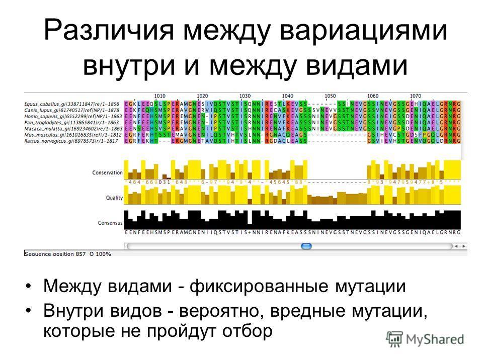 Различия между вариациями внутри и между видами Между видами - фиксированные мутации Внутри видов - вероятно, вредные мутации, которые не пройдут отбор
