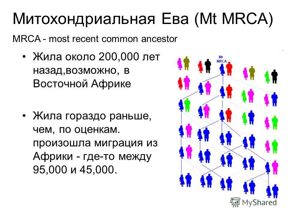 Митохондриальная Ева (Mt MRCA) Жила около 200,000 лет назад,возможно, в Восточной Африке Жила гораздо раньше, чем, по оценкам. произошла миграция из Африки - где-то между 95,000 и 45,000. MRCA - most recent common ancestor