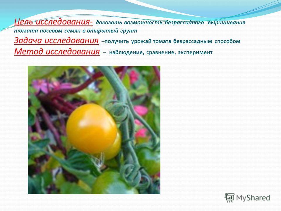 Цель исследования- доказать возможность безрассадного выращивания томата посевом семян в открытый грунт Задача исследования –получить урожай томата безрассадным способом Метод исследования –. наблюдение, сравнение, эксперимент