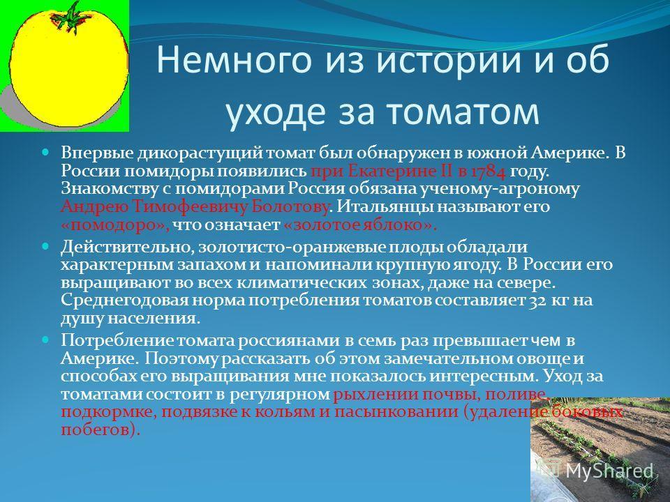 Немного из истории и об уходе за томатом Впервые дикорастущий томат был обнаружен в южной Америке. В России помидоры появились при Екатерине II в 1784 году. Знакомству с помидорами Россия обязана ученому-агроному Андрею Тимофеевичу Болотову. Итальянц