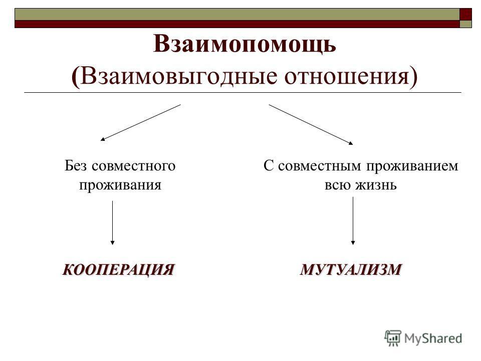 Взаимопомощь (Взаимовыгодные отношения) Без совместного проживания С совместным проживанием всю жизнь КООПЕРАЦИЯМУТУАЛИЗМ