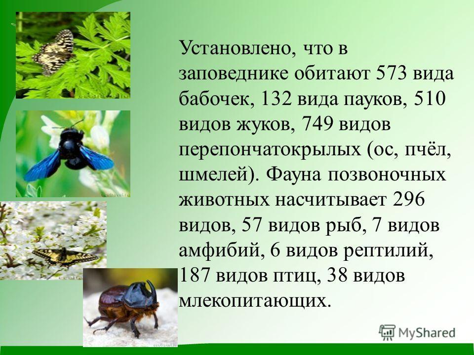 Установлено, что в заповеднике обитают 573 вида бабочек, 132 вида пауков, 510 видов жуков, 749 видов перепончатокрылых (ос, пчёл, шмелей). Фауна позвоночных животных насчитывает 296 видов, 57 видов рыб, 7 видов амфибий, 6 видов рептилий, 187 видов пт