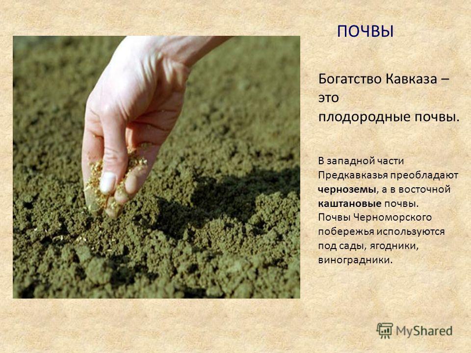 ПОЧВЫ Богатство Кавказа – это плодородные почвы. В западной части Предкавказья преобладают черноземы, а в восточной каштановые почвы. Почвы Черноморского побережья используются под сады, ягодники, виноградники.