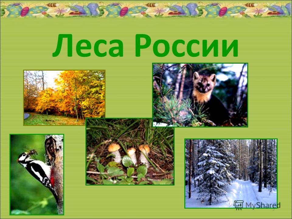 Леса России 20.11.20133