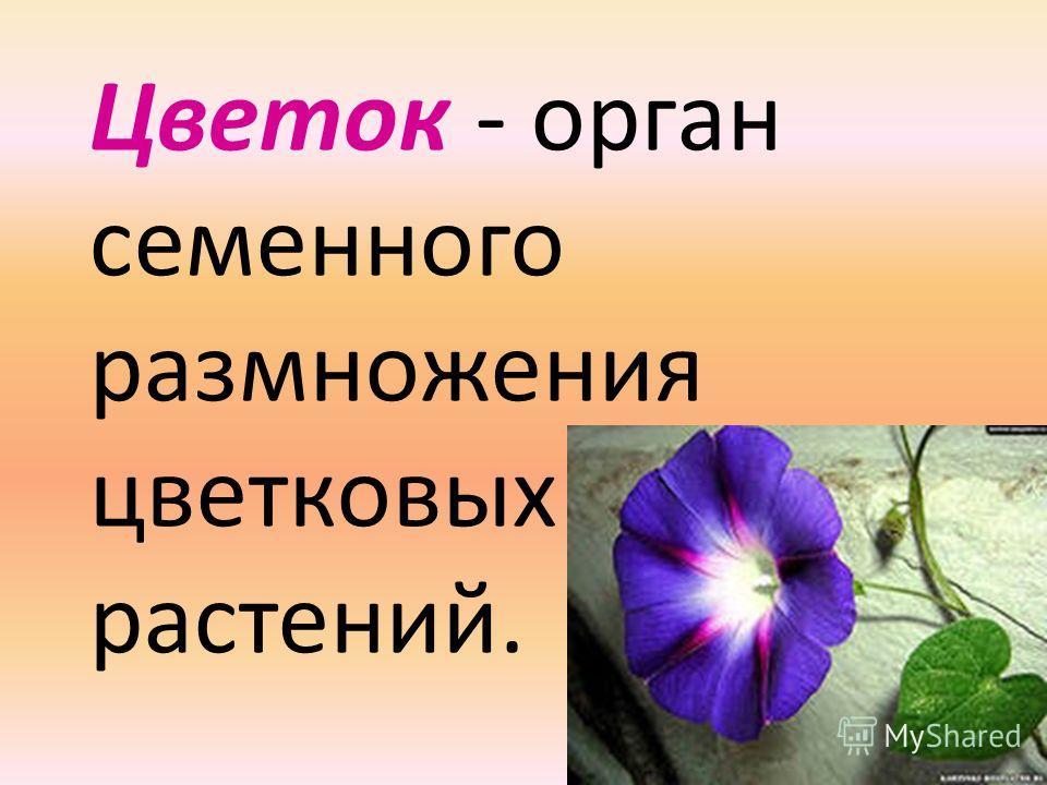 Цветок - орган семенного размножения цветковых растений.