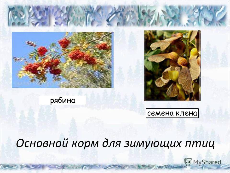 Основной корм для зимующих птиц рябина семена клена