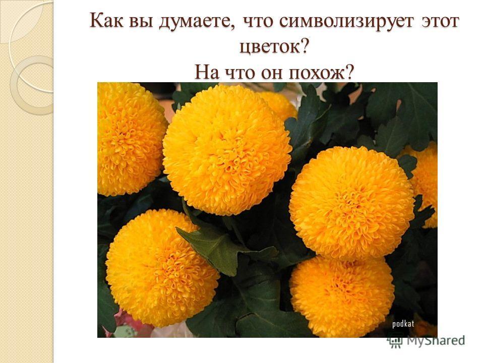 Как вы думаете, что символизирует этот цветок? На что он похож?