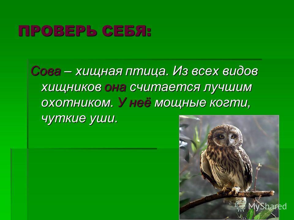 ПРОВЕРЬ СЕБЯ: Сова – хищная птица. Из всех видов хищников она считается лучшим охотником. У неё мощные когти, чуткие уши.