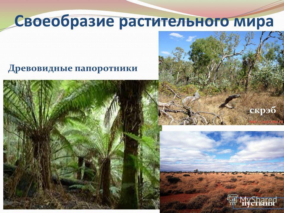 Своеобразие растительного мира Древовидные папоротники скрэб пустыня