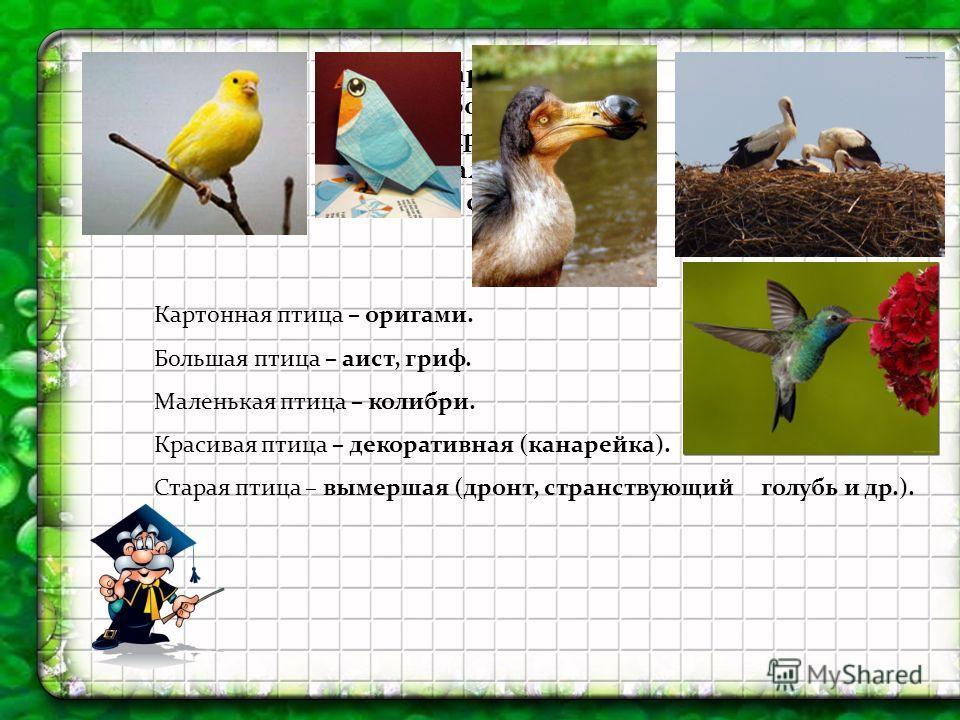 картонная, большая, красивая, маленькая, старая Картонная птица – оригами. Большая птица – аист, гриф. Маленькая птица – колибри. Красивая птица – декоративная (канарейка). Старая птица – вымершая (дронт, странствующий голубь и др.).