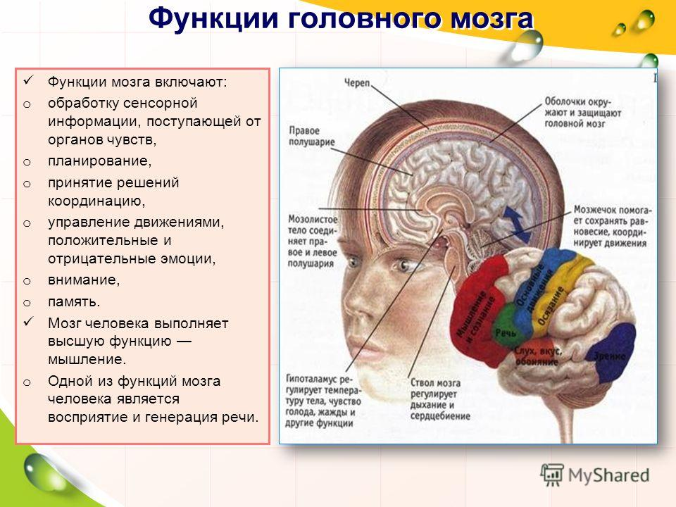 Функции головного мозга Функции мозга включают: o обработку сенсорной информации, поступающей от органов чувств, o планирование, o принятие решений координацию, o управление движениями, положительные и отрицательные эмоции, o внимание, o память. Мозг
