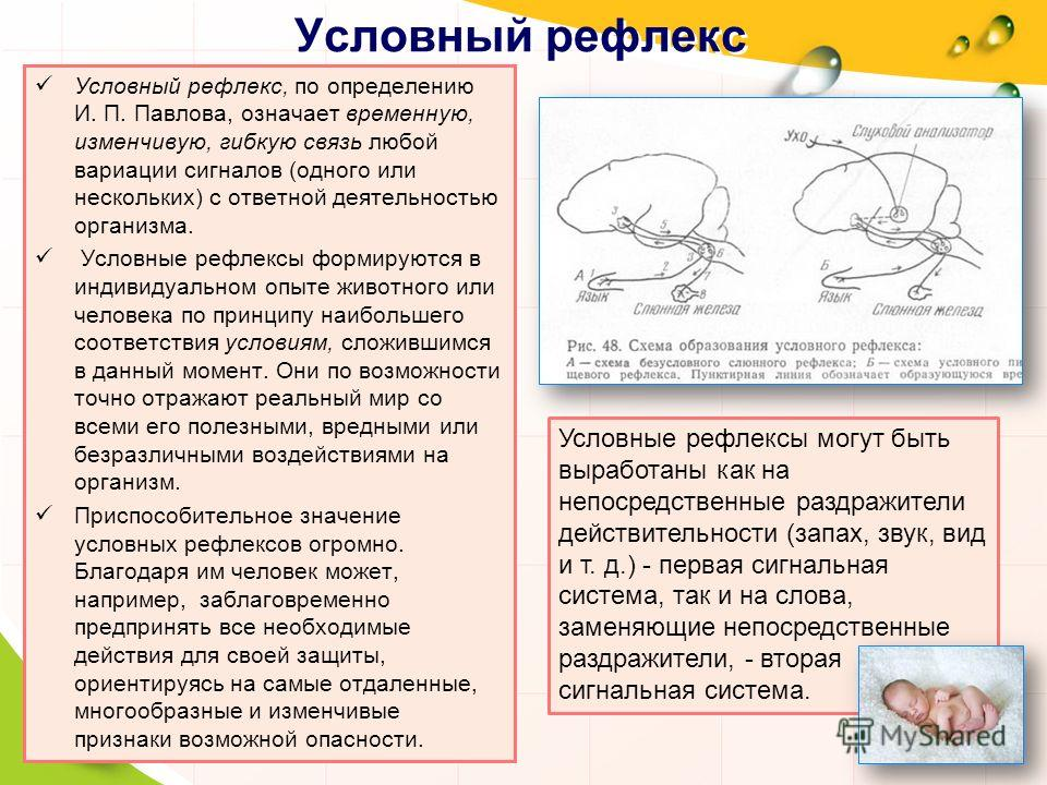 Условный рефлекс Условный рефлекс, по определению И. П. Павлова, означает временную, изменчивую, гибкую связь любой вариации сигналов (одного или нескольких) с ответной деятельностью организма. Условные рефлексы формируются в индивидуальном опыте жив