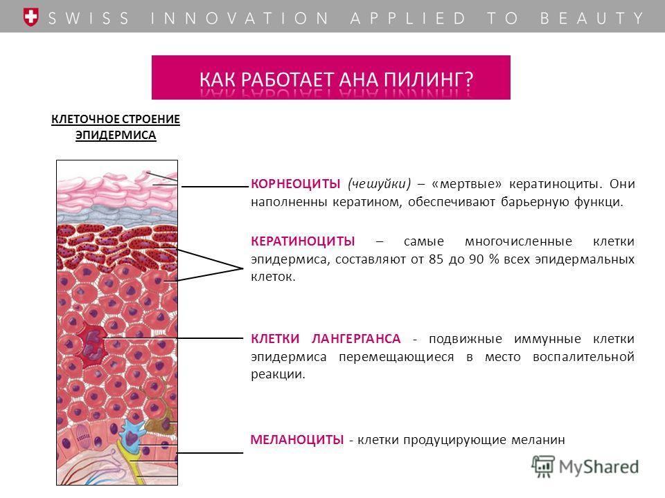 КЛЕТОЧНОЕ СТРОЕНИЕ ЭПИДЕРМИСА КЛЕТКИ ЛАНГЕРГАНСА - подвижные иммунные клетки эпидермиса перемещающиеся в место воспалительной реакции. КОРНЕОЦИТЫ (чешуйки) – «мертвые» кератиноциты. Они наполненны кератином, обеспечивают барьерную функци. КЕРАТИНОЦИТ