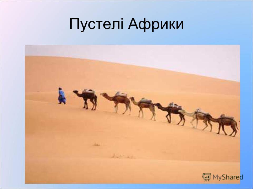 Пустелі- це природная зона з дуже малою кількістю опадів, рідкою рослинністю, а то і без неї. Клімат Грунти рослинність Тваринний світ 23 0 сш 0 Сахара Наміб