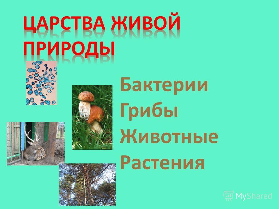 Бактерии Грибы Животные Растения