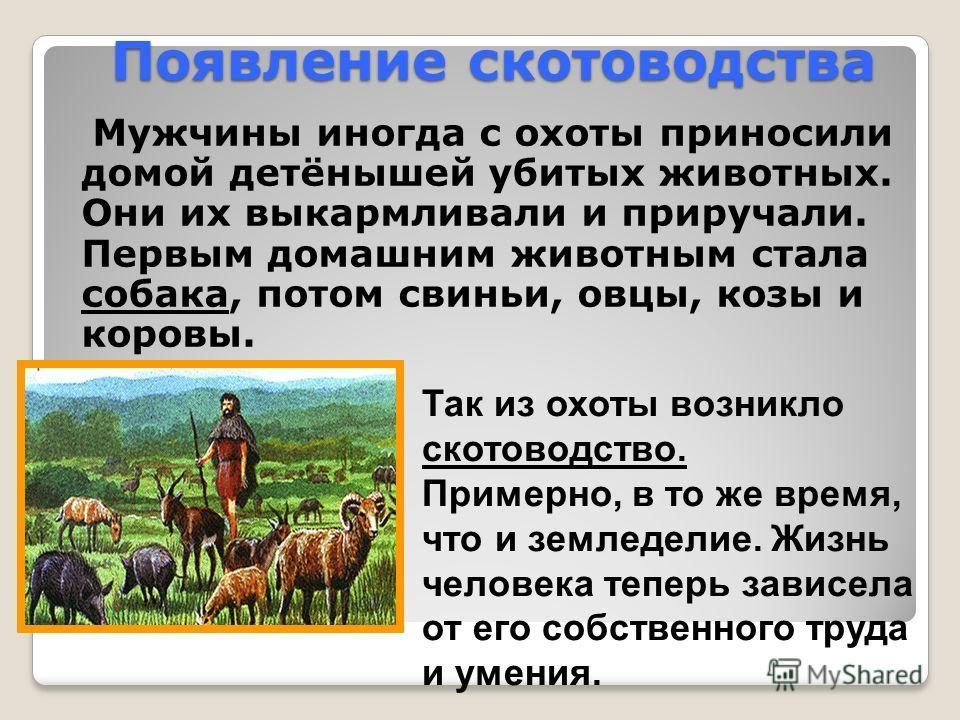 Появление скотоводства Мужчины иногда с охоты приносили домой детёнышей убитых животных. Они их выкармливали и приручали. Первым домашним животным стала собака, потом свиньи, овцы, козы и коровы. Так из охоты возникло скотоводство. Примерно, в то же