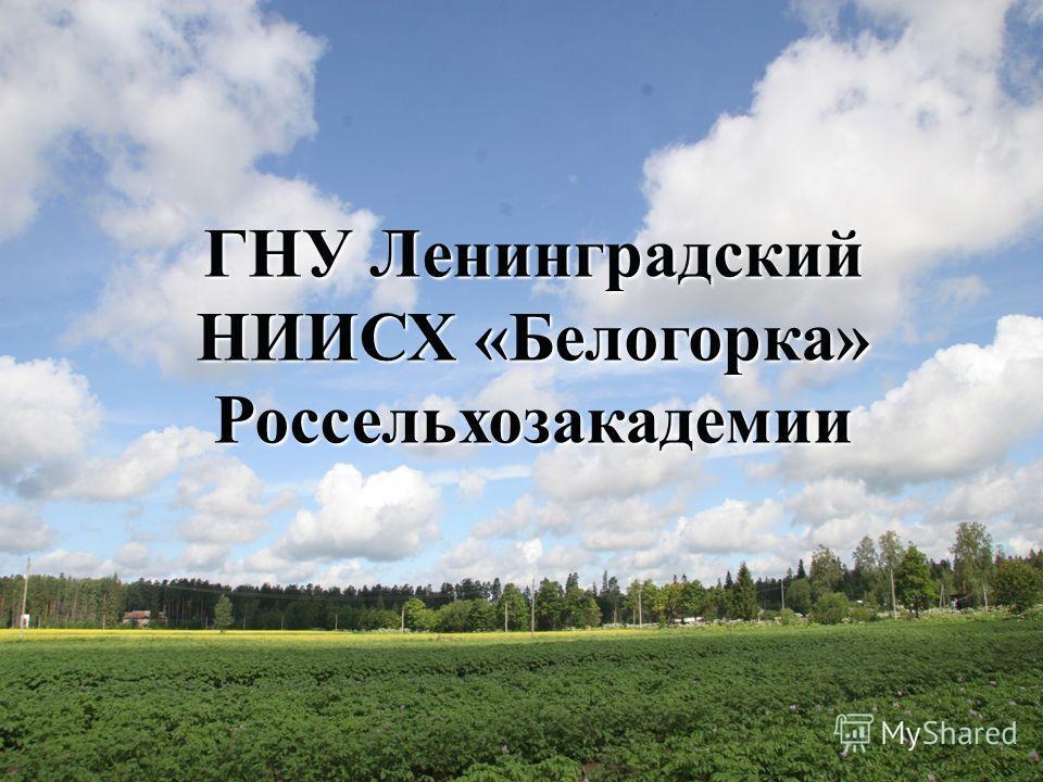 ГНУ Ленинградский НИИСХ «Белогорка» Россельхозакадемии