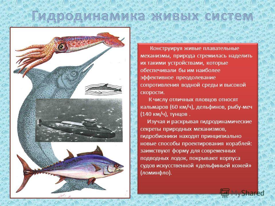 Конструируя живые плавательные механизмы, природа стремилась наделить их такими устройствами, которые обеспечивали бы им наиболее эффективное преодолевание сопротивления водной среды и высокой скорости. К числу отличных пловцов относят кальмаров (60