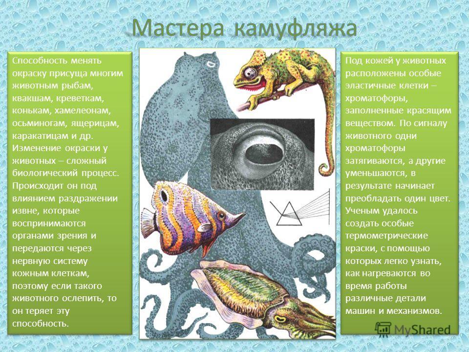 Способность менять окраску присуща многим животным рыбам, квакшам, креветкам, конькам, хамелеонам, осьминогам, ящерицам, каракатицам и др. Изменение окраски у животных – сложный биологический процесс. Происходит он под влиянием раздражении извне, кот