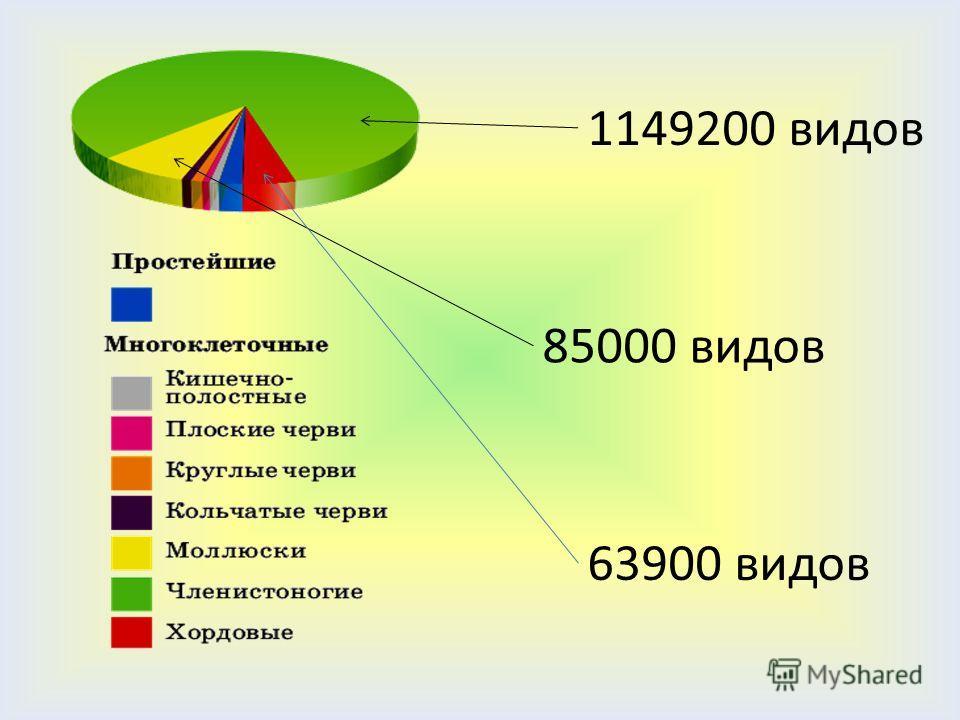 1149200 видов 85000 видов 63900 видов