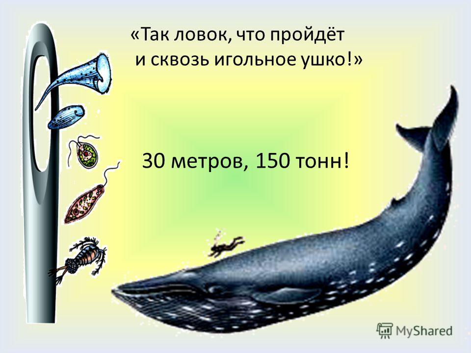 «Так ловок, что пройдёт и сквозь игольное ушко!» 30 метров, 150 тонн!