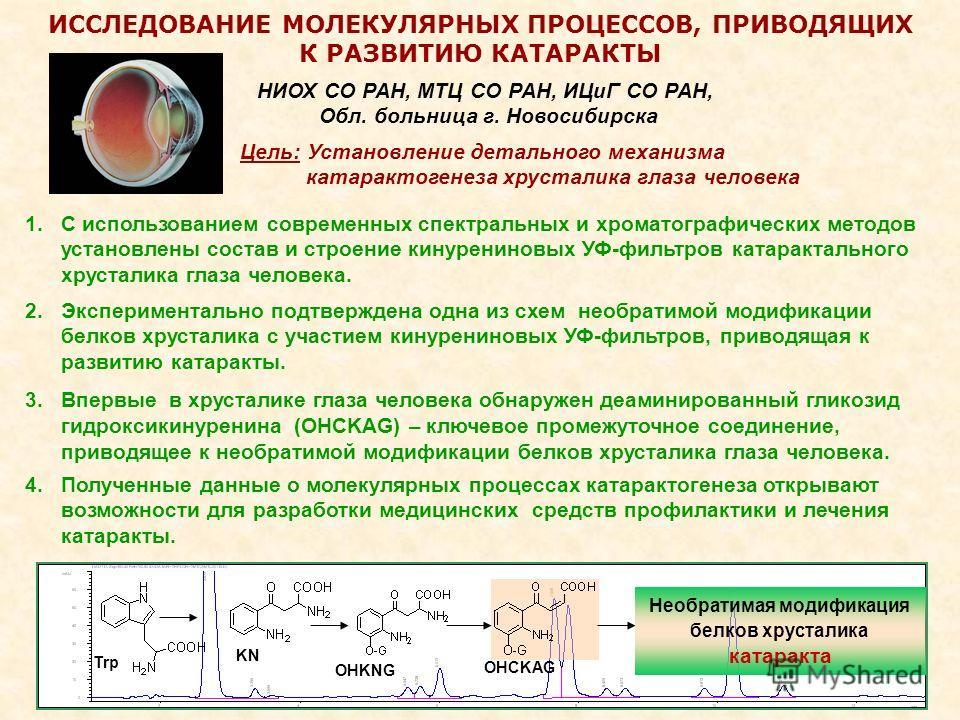 2 ИССЛЕДОВАНИЕ МОЛЕКУЛЯРНЫХ ПРОЦЕССОВ, ПРИВОДЯЩИХ К РАЗВИТИЮ КАТАРАКТЫ 1.С использованием современных спектральных и хроматографических методов установлены состав и строение кинурениновых УФ-фильтров катарактального хрусталика глаза человека. НИОХ СО