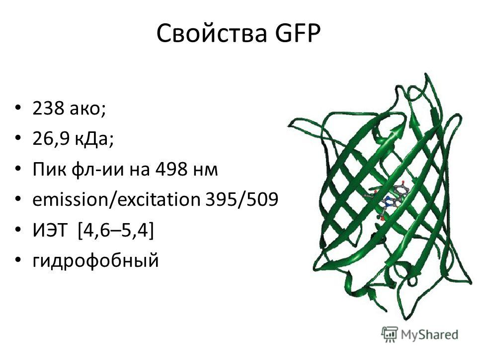 Свойства GFP 238 ако; 26,9 кДа; Пик фл-ии на 498 нм emission/excitation 395/509 ИЭТ [4,6–5,4] гидрофобный