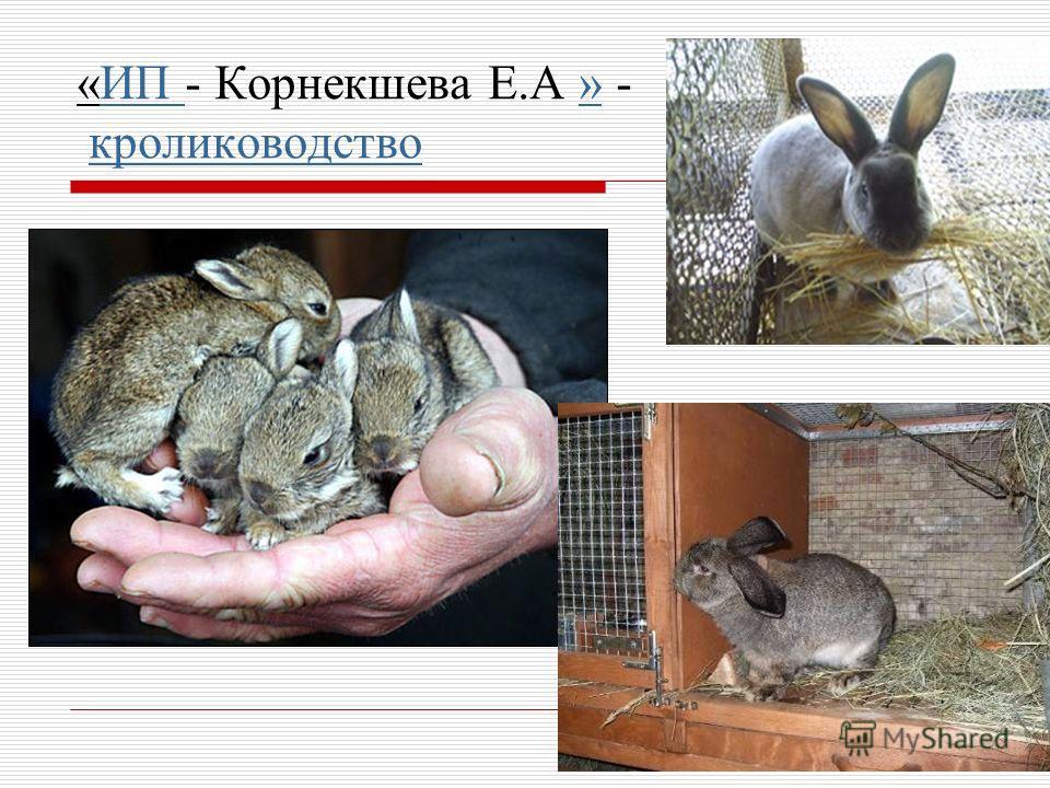 «ИП - Корнекшева Е.А » - кролиководство