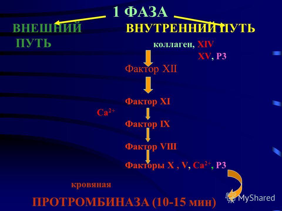 1 ФАЗА ВНЕШНИЙ ВНУТРЕННИЙ ПУТЬ ПУТЬ коллаген, XIV XV, Р3 Фактор ХII Фактор ХI Ca 2+ Фактор IХ Фактор VIII Факторы Х, V, Ca 2+, P3 кровяная ПРОТРОМБИНАЗА (10-15 мин)