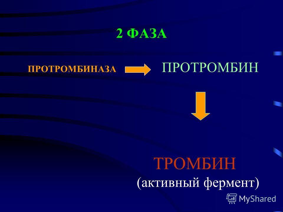 2 ФАЗА ПРОТРОМБИНАЗА ПРОТРОМБИН ТРОМБИН (активный фермент)